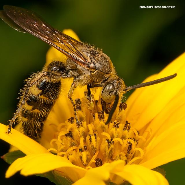'beesy friday'