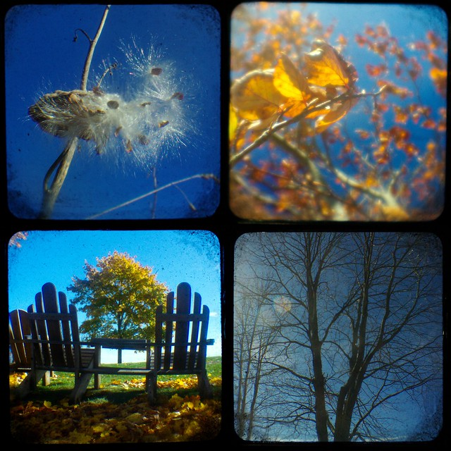 4 seasons collage
