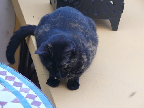 Black cat, Tangier, Morocco