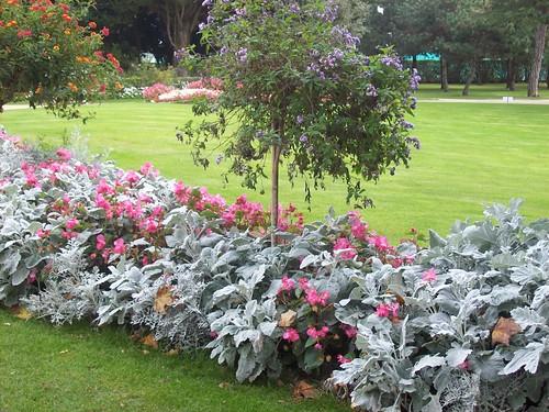 Jardin Christian DIOR - GRANVILLE | BEAU MASSIF dans le jard… | Flickr