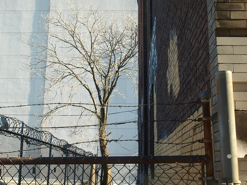 A Tree Grows in Queens | by 9brandon