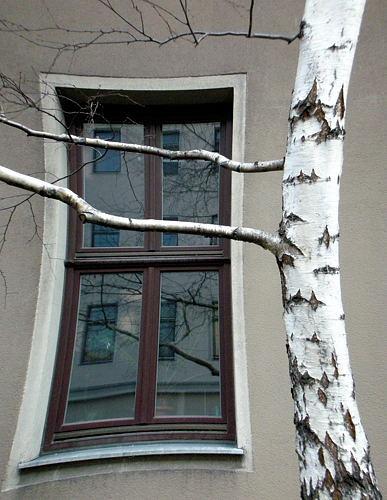 Wien - Fenster im Winter