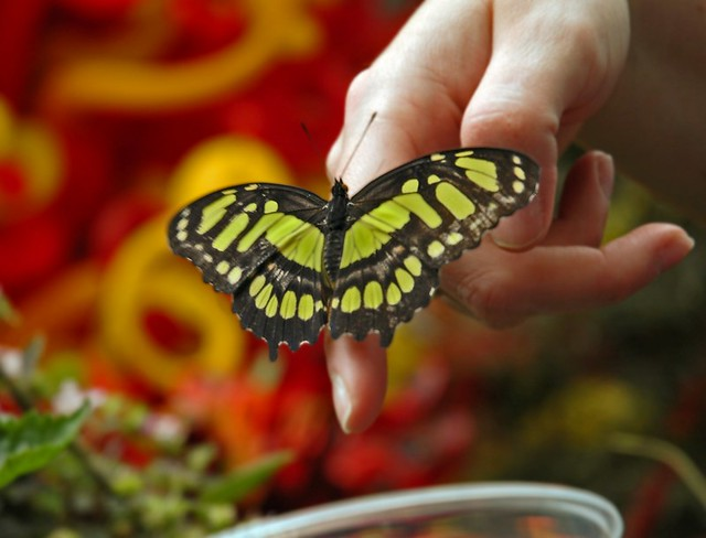 Butterfly on Angela's Hand