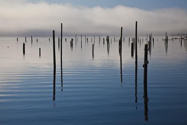 Log Boom Posts on Hood Canal, Washington