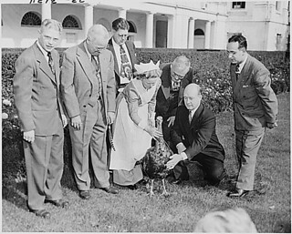 Photograph of President Truman looking on as representatives of the turkey industry exhibit the Thanksgiving turkey they have presented to the President, outside the White House, 11/16/1949