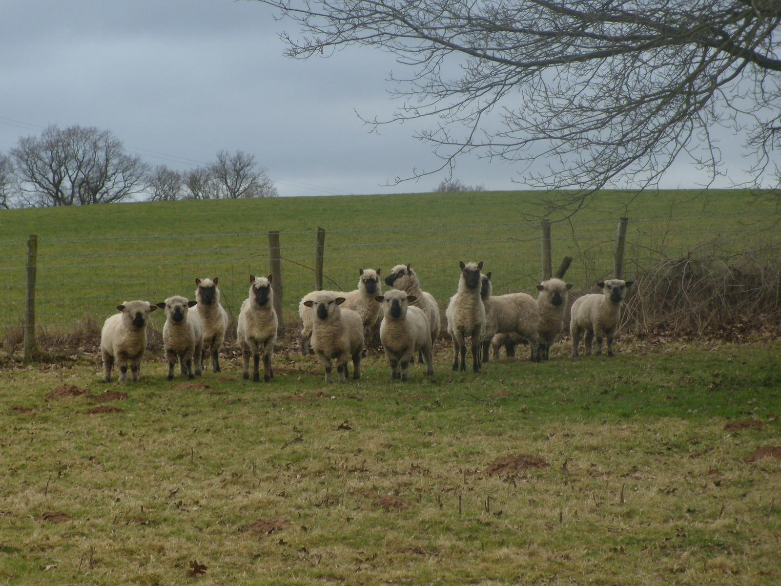 As ewe were Stop staring at me. OK? Witley to Haslemere
