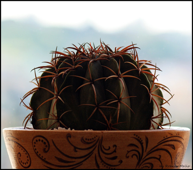 Ball of thorns ..