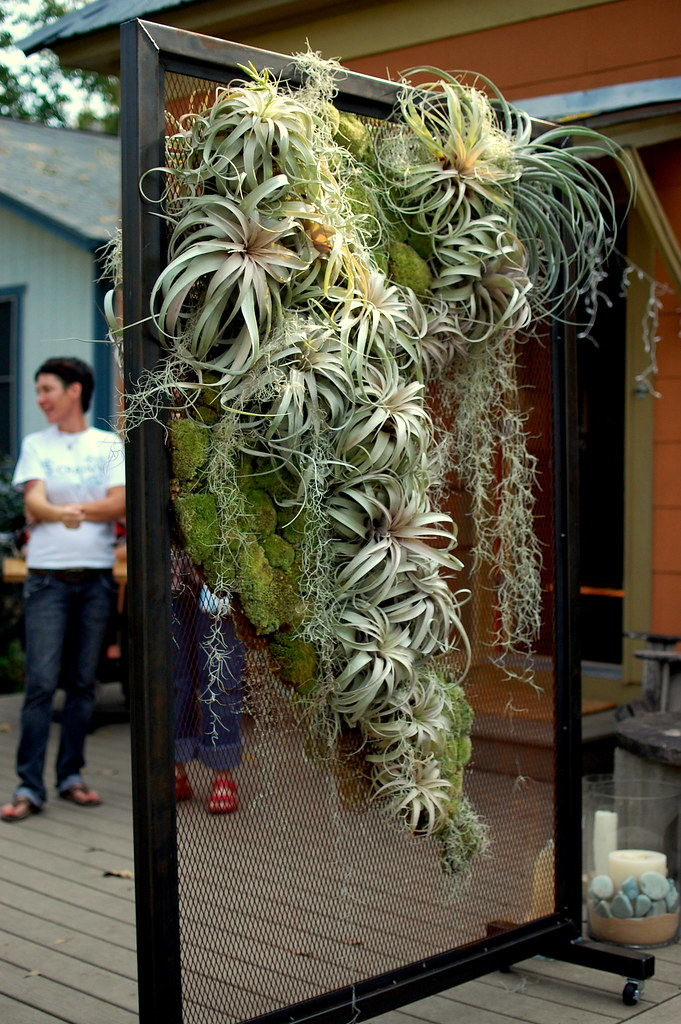 Air Plants On Display Scott Miller Flickr