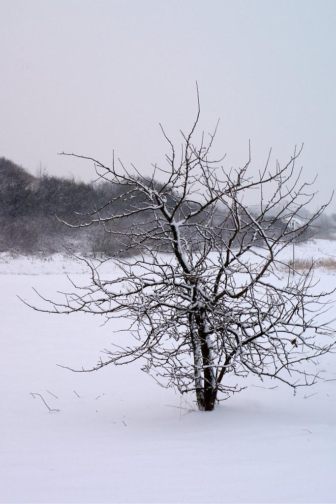 Drzewko / Little tree