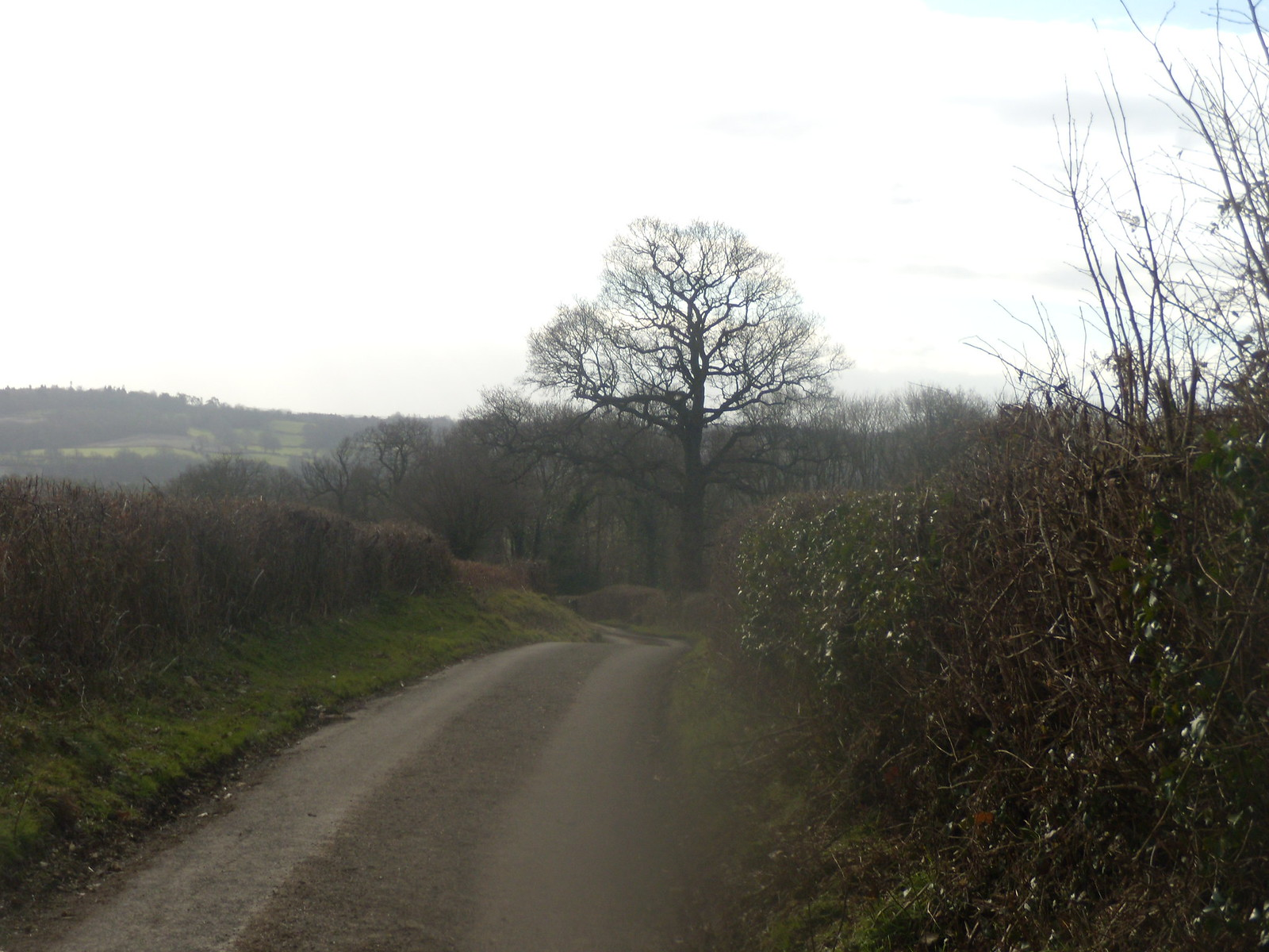 Along the road Balcombe round (winter)