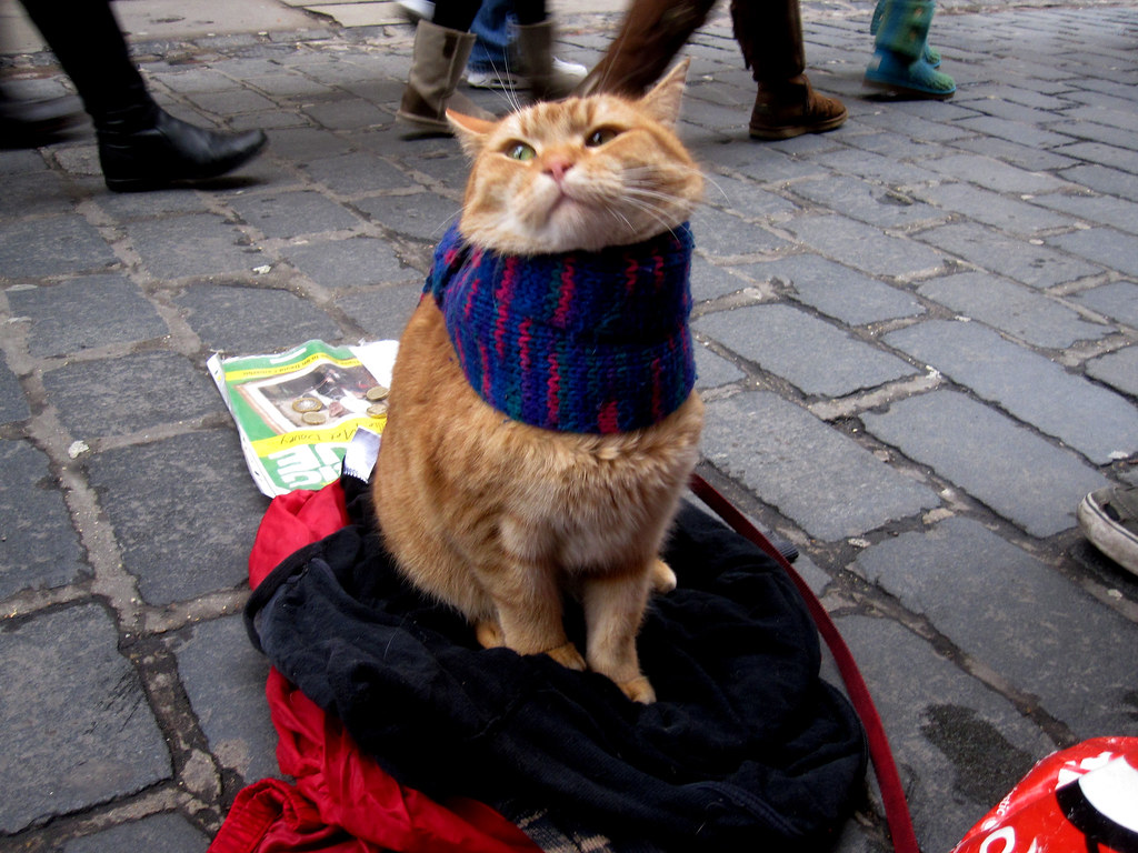 Scarf cat aka A Street Cat named Bob!