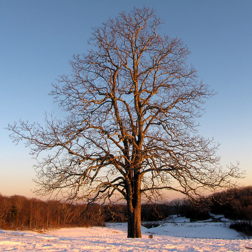 winter tree square landscape march northcarolina landschaft blueridgeparkway lonelytree appalachianmountains westernnorthcarolina southernappalachians ccbyncsa moseshconememorialpark canonpowershotsx10is