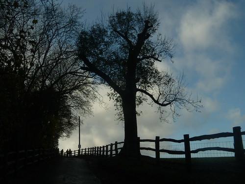 Silhouette tree 1 Knockholt Circular