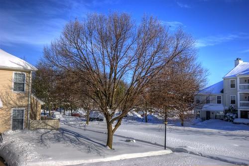 blue white snow tree virginia snowstorm springfield hdr vicenç photomatix abigfave nikond80 feliú tamron18270 sabreur76 vicençfeliú
