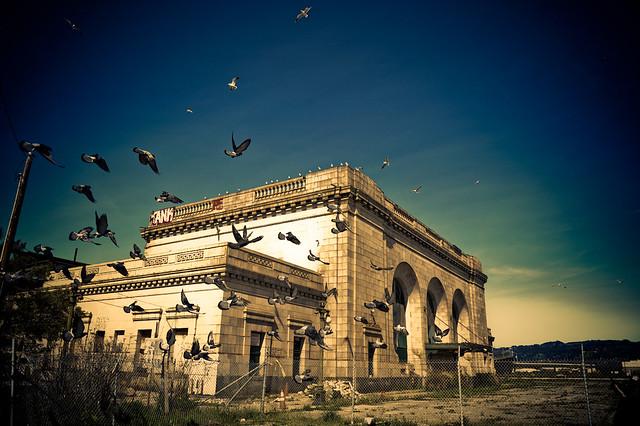 Abandoned railway station : Pigeons