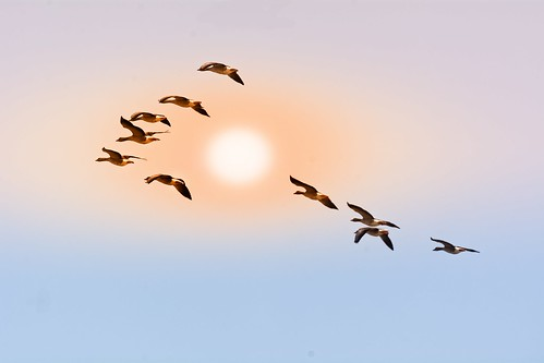 Ten Geese And A Soft Wintersun