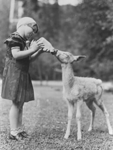 Girl feeding fawn, circa 1930s