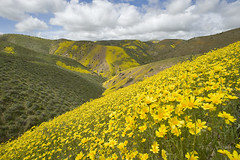 Carrizo Plain National Monument, CA | by ER Post