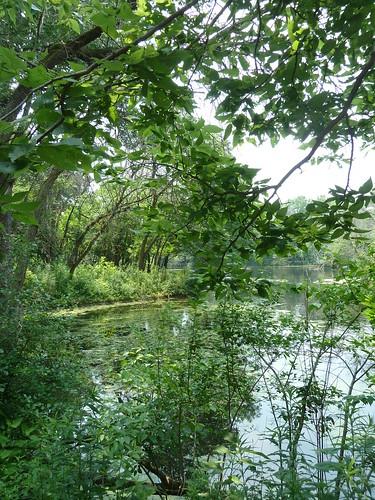 trees water leaves landscape pond foliage brookfieldzoo brookfieldil