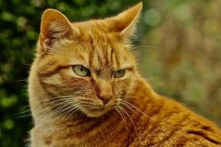 Cat   by heiko.moser (+ 12.100.000 views )