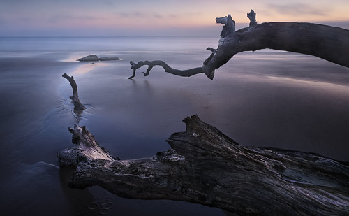 boneyardjourneys canon georgia jekyllisland winter atmosphere beach bluehour coast color dawn driftwood landscape light longexposure mood nature seascape seaside shore sunrise trees