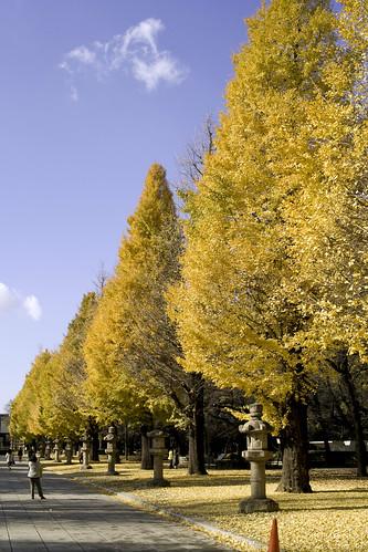 黄葉, 靖国神社