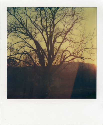 sunset tree film polaroid sx70 iso100 evening tennessee branches hill bryan flare instant epson dayton v700 artistictz tzartistic