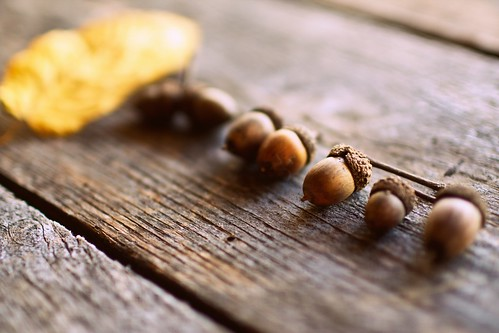 more acorns | by hannah * honey & jam