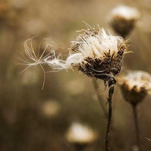 autumn macro weeds seeds
