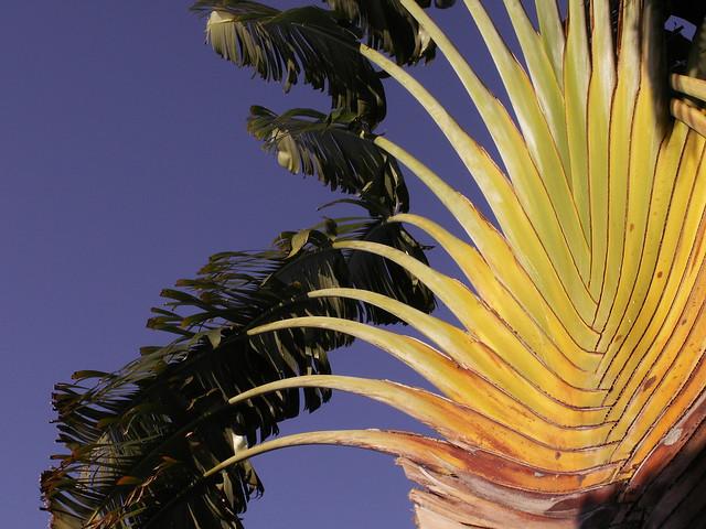 my favorite palm