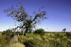 GD_tree