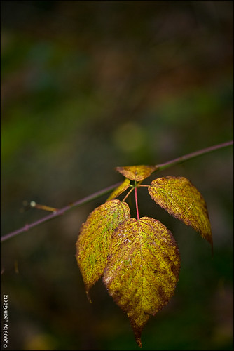 Autumn Leave | by photovote
