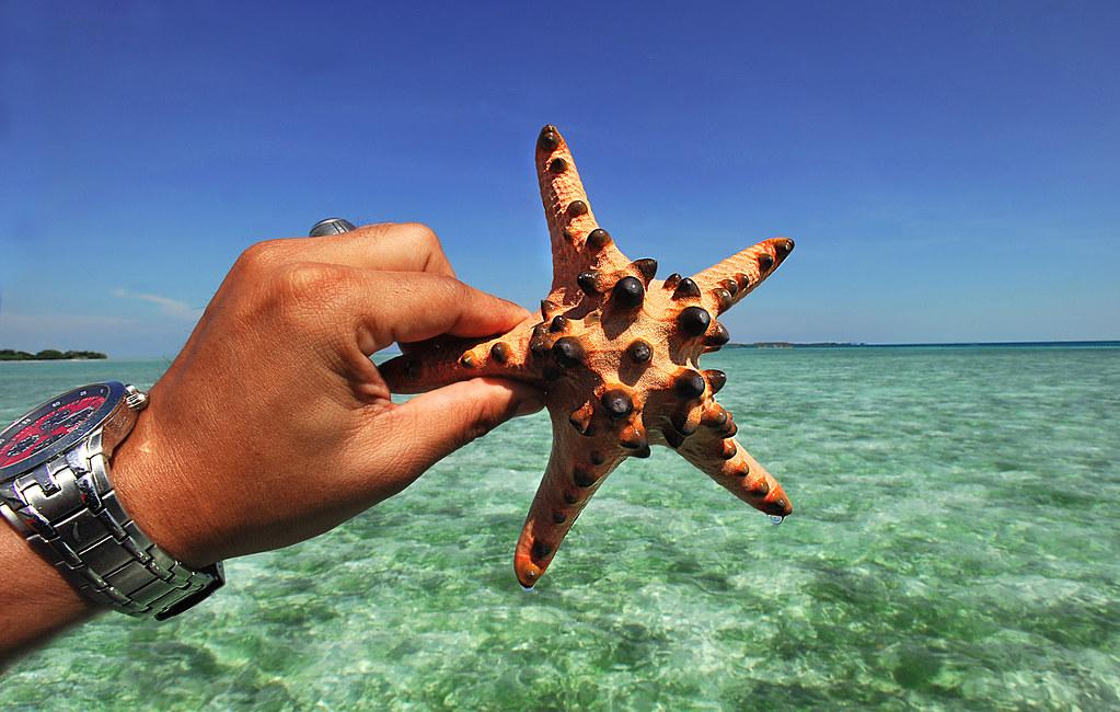 Star Fish Tapak Sulaiman Bum Bum Island Semporna S Flickr