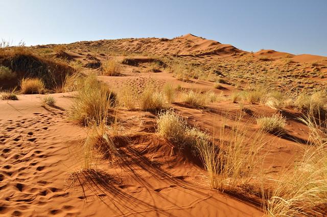 Orange sands of Elin dune