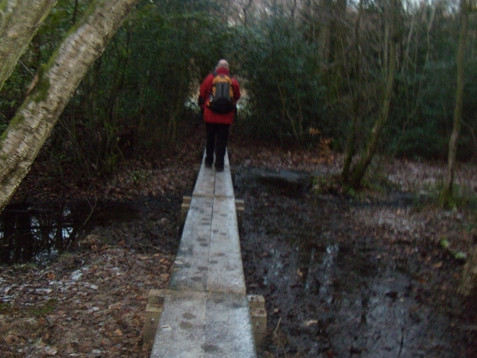 Walkin' the plank DSCN8335 Haslemere Round Walk