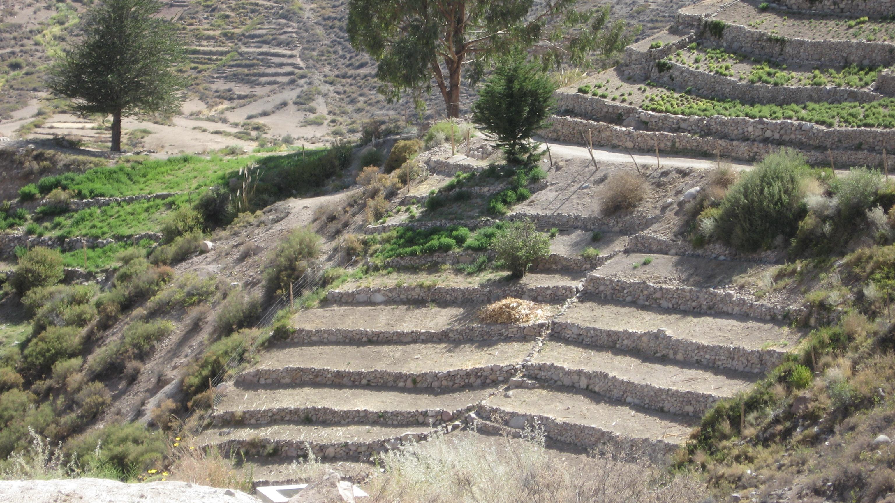 All Sizes Terrazas De Cultivo Aymara Flickr Photo Sharing