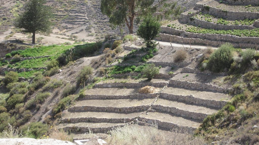 Terrazas De Cultivo Aymara Este Tipo De Cultivo En Forma