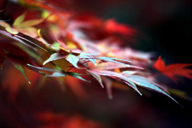 Autumn leaves ~燭~