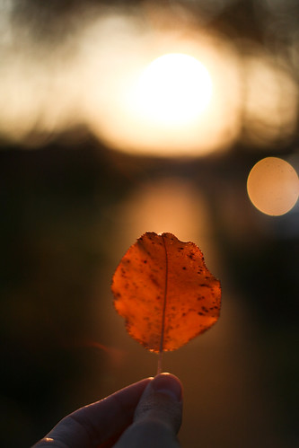light sunset self leaf glow bokeh horizon sidewalk 365 project365 thanksdl daniellightgavemehisold1850mm thiswastakenshortlyafter contrastbrightnessandvibrancyupped