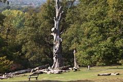 リッチモンド公園