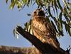 Little Eagle by mark.photos