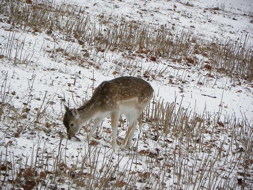 bridge winter snow geotagged southpark deer snowing ferdi hert snowworld walkingthedogs zuiderpark zuiderparkdenhaag ferdisworld nikoncoolpixp90 southparkthehague geo:lat=52058792 geo:lon=4289687