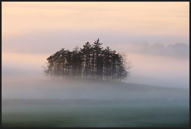 The Isle of trees