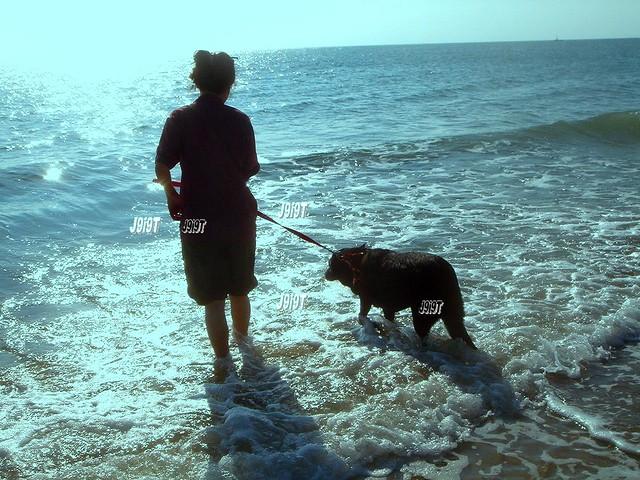 สุนัขเป็นโรคไตวายเฉียบพลันจากสารเคมี  สุนัขไม่มีโอกาสรอดเลย