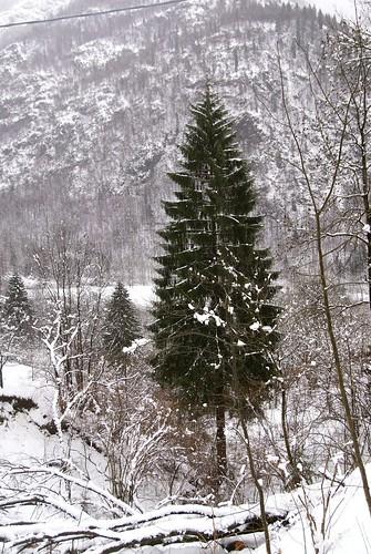 Dolomitti_italia_arbre_nadal