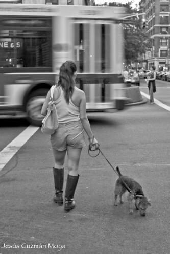 La Vida de un Perro