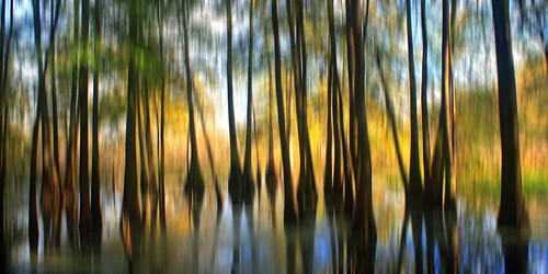 morning autumn trees panorama reflection fall sunrise la louisiana lafayette ben swamp pierce cypress pan duckweed lakemartin breauxbridge cypressislandpreserve