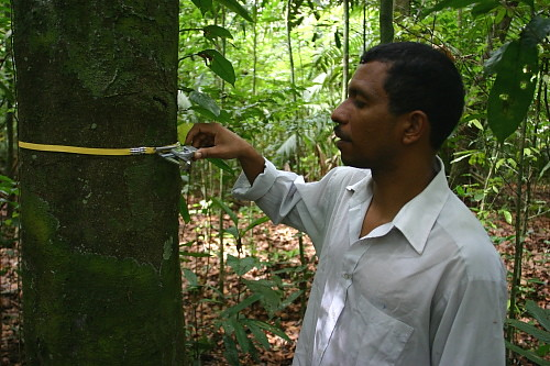 Wed, 10/15/2008 - 09:58 - Pablo Ramos measuring tree growth with a caliper from a plastic dendrometer (Oct 2008). Credit: Markku Larjavaara