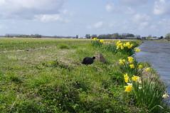Keukenhof polder rondvaart