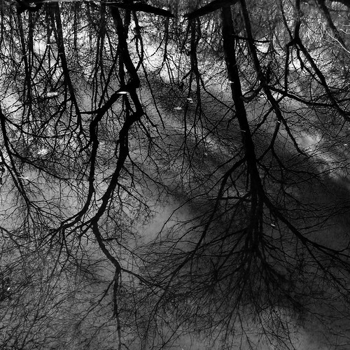 trees blackandwhite bw reflection water forest newjersey woods stream upsidedown stonybrook nj princeton brook institutewoods charleshrogerswildliferefuge fav10 princetoninstituteforadvancedstudy